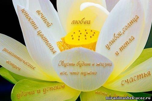 http://miranimashek.com/_ph/133/2/944040927.jpg