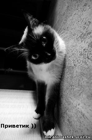 Соционические коты.  Часть 3.