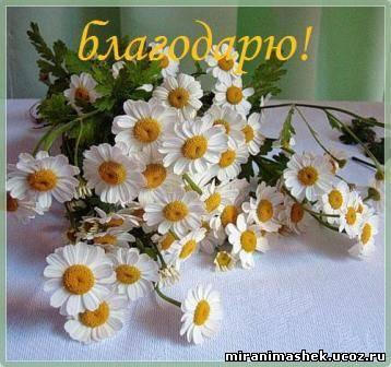 http://miranimashek.com/_ph/140/2/117019261.jpg