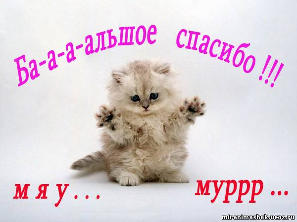 http://miranimashek.com/_ph/140/2/235029478.jpg