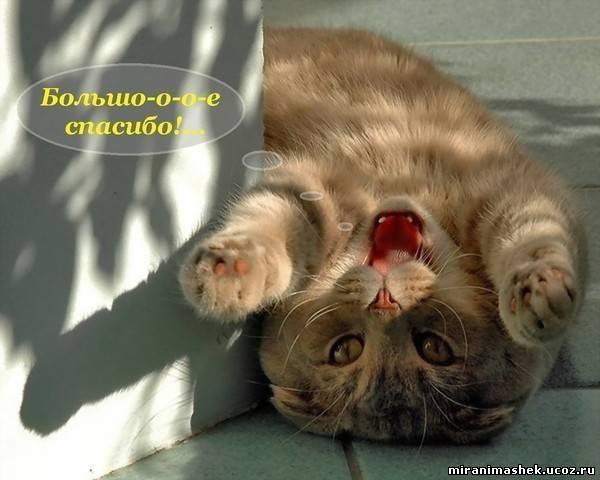 http://miranimashek.com/_ph/140/2/811338045.jpg