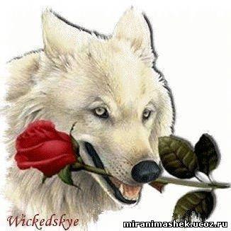Картинки рисунки волки картинки