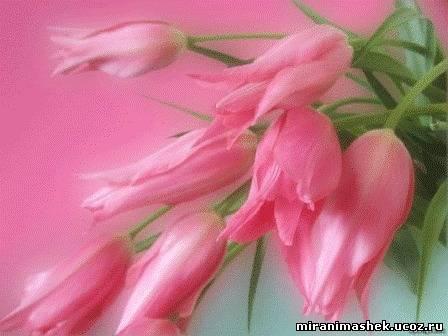 анимированные картинки Цветы скачать бесплатно