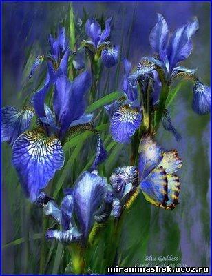 красивые Картинки, рисунки Цветы бесплатно, без регистрации, без смс