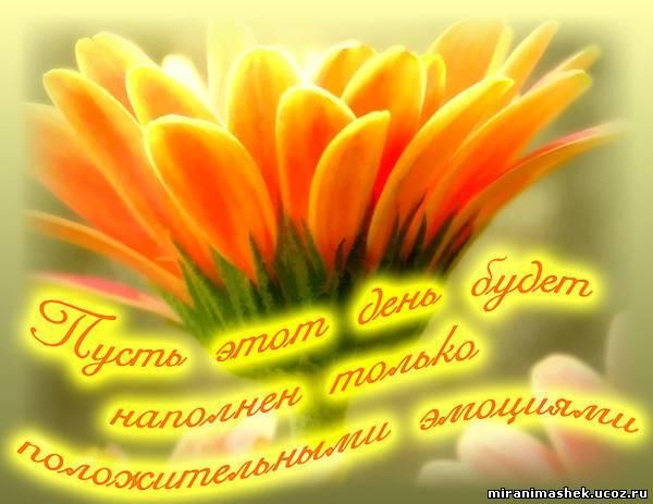 http://miranimashek.com/_ph/389/2/846502230.jpg