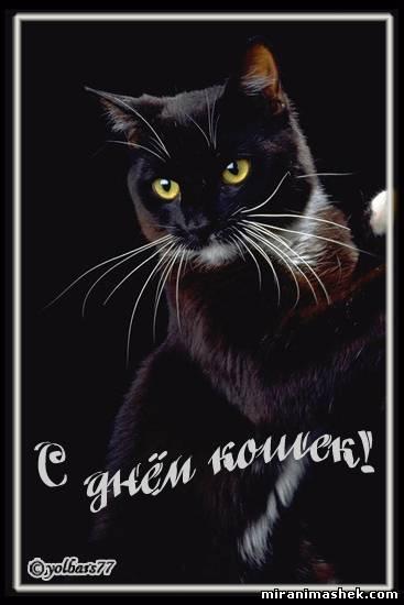 гламурные кошки.вышивка.