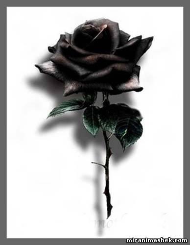 Рхема вышивки Букет роз: