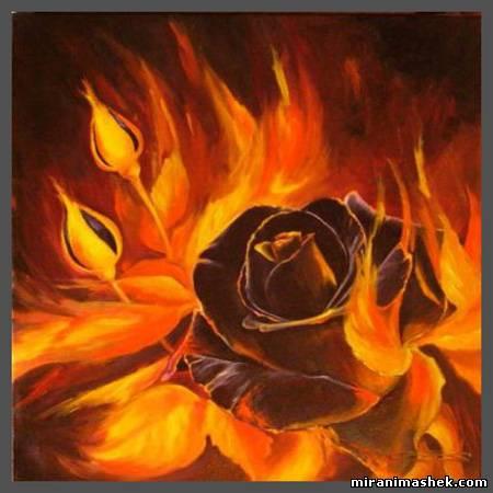 красивые Картинки, рисунки Роза чёрная