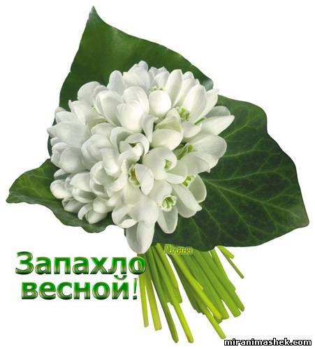 http://miranimashek.com/_ph/622/2/84457389.jpg