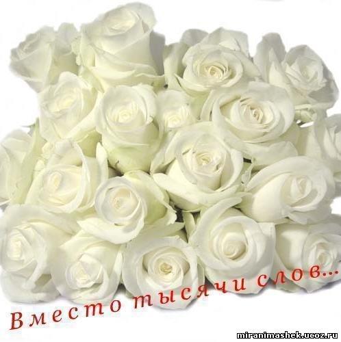 http://miranimashek.com/_ph/206/2/402951844.jpg