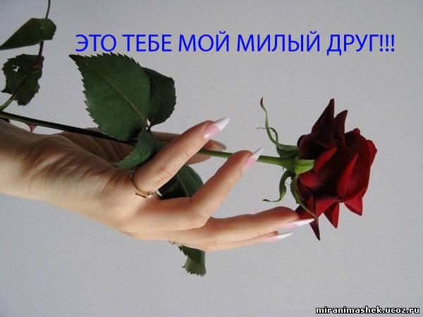 http://miranimashek.com/_ph/358/2/43275304.jpg