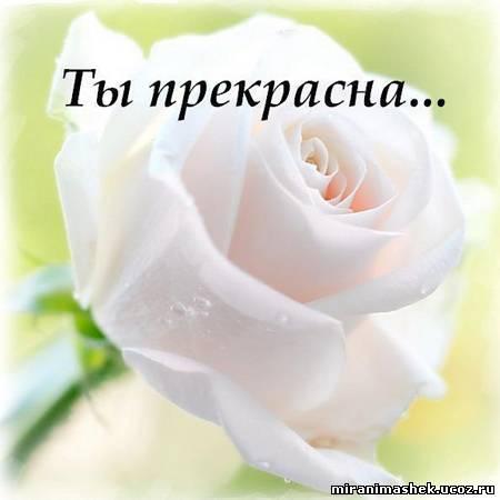 http://miranimashek.com/_ph/375/2/762606194.jpg