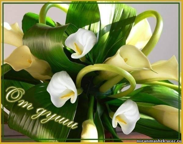 http://miranimashek.com/_ph/379/2/77450011.jpg